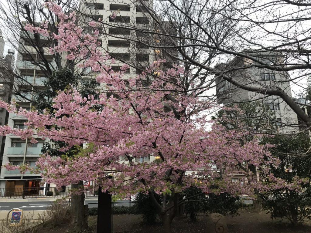 寒さも終わり?春の訪れを感じる梅が咲いていました。
