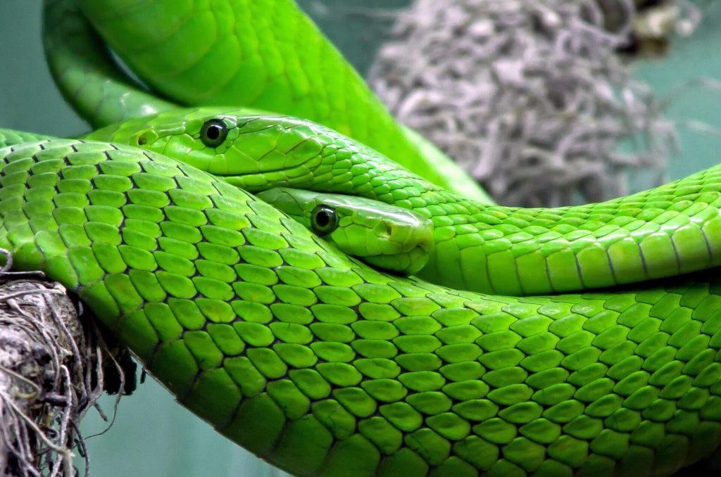 爬虫類脳(本能的) - 影響力:強