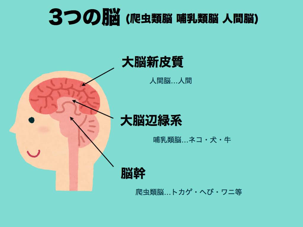 3つの脳(爬虫類脳 哺乳類脳 人間脳)とは